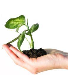 Tipos de Plantas - Tipos de Plantas