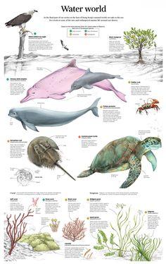 Water World #Infographic
