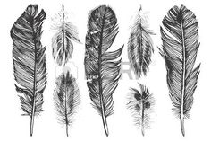 feather: 7 hand drawn feathers  on white background Illustration