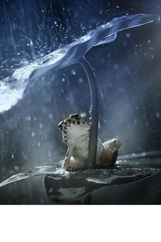 Grenouille s'abritant So cute, out of the rain! Funny Frogs, Cute Frogs, Animals And Pets, Funny Animals, Cute Animals, Beautiful Creatures, Animals Beautiful, Sapo Meme, Flora Und Fauna
