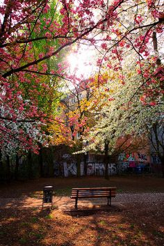 Spring colors - Berlin - Germany by Christophe Paquignon...oh to sit on this bench and relax with a cup of coffee and dream...