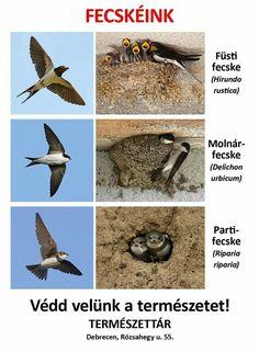 Montessori Materials, Bird Tree, Animal Crafts, Amazing Nature, Birds, Spring, Animals, Barn Swallow, Animales
