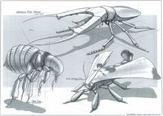 Wildlife Sketches - Feng Zhu Design: FZD Term 1 Student work, Week 8
