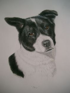 Otis - mixed breed - Commissioned art by Lesley Zoromski at dogsindetail.com