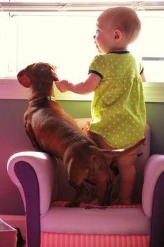 anim, wiener, delight doggi, children, dachshunds