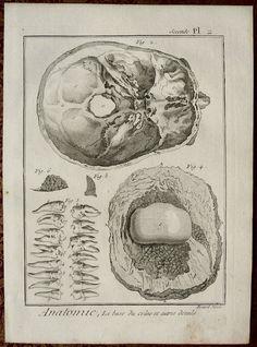 1779. Anatomie, seconde Pl. 2. La base du crâne et autres détails. Seconde Pl. 2. Denis Diderot and Jean le Rond d'Alembert. Encycopédie.