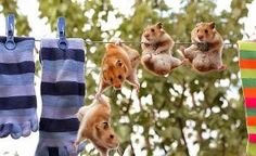 animals funny funny animals hamsters national