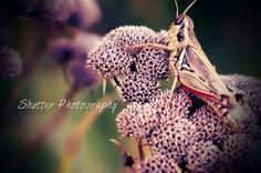 Grasshopper - Shutter Photography Shutter Photography, Shutters, Animals, Blinds, Shades, Animales, Animaux, Window Shutters, Animal