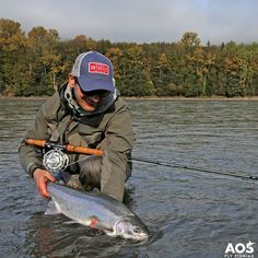 Steelhead on Skeena