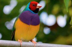 I meravigliosi colori di madre natura