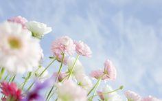 Wildflower High Definition