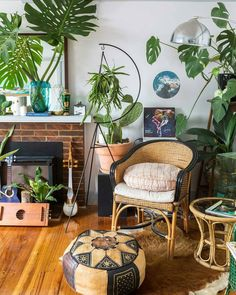 """3,689 Likes, 24 Comments - Urban Jungle Bloggers™ (@urbanjungleblog) on Instagram: """"Saturday night greens! Sit back, relax and enjoy your new (and old!) plants :@rentedspace…"""""""