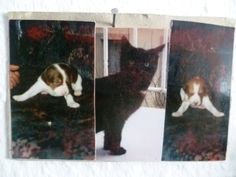 Sami & Merlin & Lusi 1998, #braque #st.germain # pointer #puppy #pet #haustier #love #family #member #trauer #regenbogen #rainbow