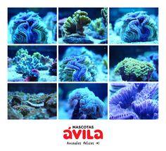 Todo sobre acuariofilia en Mascotas Ávila http://www.mascotasavila.com