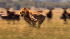 #cecilthelion killed by sadist dentist who apparently gets to keep his licence to practice.