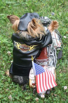 Harley - Davidson USA