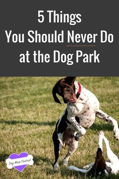 Going to the dog park is such a great experience for both you and your dog. Before you go, however, be sure to know these five things you should never do.