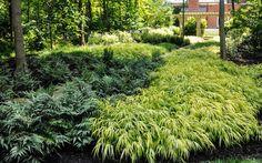 McCullough's Landscape & Nursery ( Landscape Design ) - large swaths of plantings Outdoor Plants, Outdoor Gardens, Plant Design, Garden Design, Landscape Nursery, Shade Garden Plants, Ferns Garden, House Plants, Shade Flowers