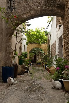 Cat alley by Jeff van der Wees, via Flickr -Rhodes, Greece