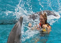 Swim with dolphins in Cozumel - one of our most popular cruise excursions! http://www.shoreexcursionsgroup.com/Cozumel-Caribbean-Shore-Excursions-p/caczdtrdolswm.htm?Click=96019