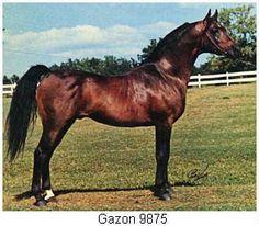 GAZON