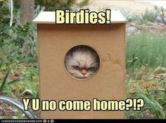 Haha looks like my kitty