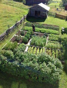 Garden Ideas For Small Gardens Large Vegetable Garden Design Plans Farm Gardens, Small Gardens, Outdoor Gardens, Back Yard Gardens, Vegetable Garden Planning, Backyard Vegetable Gardens, Garden Tomatoes, Vegetables Garden, Home Vegetable Garden Design