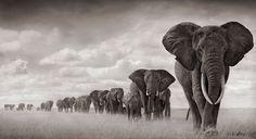 filleri severim