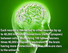 World Congress on Neuroscience and Brain Disorders 10 Interesting Facts, Intresting Facts, Amazing Facts, Brain Facts, Brain Anatomy, Curious Facts, Neuroplasticity, Quantum Physics, Brain Health