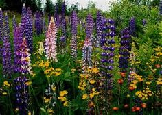 Wildflowers along Highway 12, Northeastern Minnesota