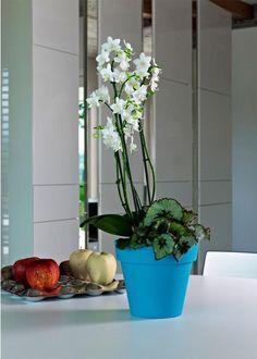 mini ikon planter| Euro3plast