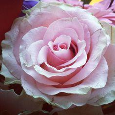 #rose #pink #flower #bouquet by sheerblonde16