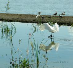 Fauna en el Lago de Chapala