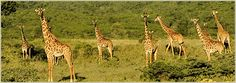 Arusha-Nationalpark   Tansania Reisen   Safari, Kilimanjaro oder Sansibar   Afrikareisen