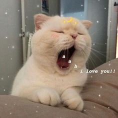 ideas for memes apaixonados gatos Cute Cat Memes, Cute Love Memes, Funny Cats, Funny Memes, Humorous Cats, Love You Memes, Cute Kittens, Cats And Kittens, Ragdoll Cats