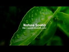 Nature Sound 1 - The Most Relaxing Music w/ Water