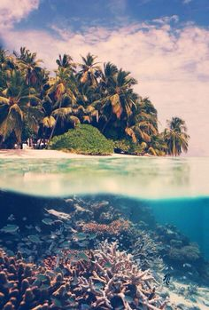 Imagine snorkeling here in the warm waters of the Caribbean sea of Costa Rica...