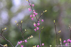 4911 http://www.kurtjohnsonphotography.com/