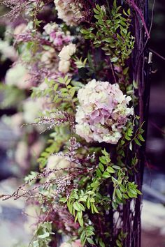 Climbing Hydrangea Vine blooms in early summer and can reach 50' tall in sun or shade. Zones 4-8.