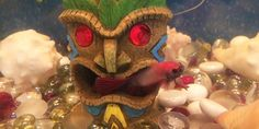 Just like his momma, BookBub the Betta loves hanging out at the tiki bar... @bookbub