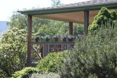 Flowers on the porch of the main house at Toad Hill Farm.