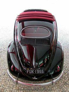Burgundy Bug