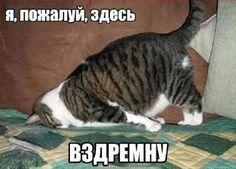 Фото: Смешные приколы про животных: «Эти милые зверушки ...