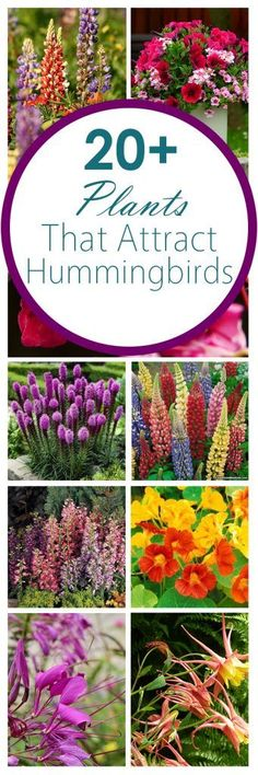 Gardening Tips, Popular Gardening Ideas, Flowers For Hummingbirds,  Hummingbirds, Gardening 101,
