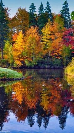Beautiful Fall colors on Trees on Lake Fall Pictures, Pretty Pictures, Pictures Of Trees, Autumn Photos, Fall Pics, Amazing Pictures, Travel Pictures, Autumn Scenes, Beautiful Landscapes