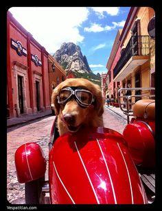 Handsome guy from Bernal, Queretaro de Arteaga, Mexico