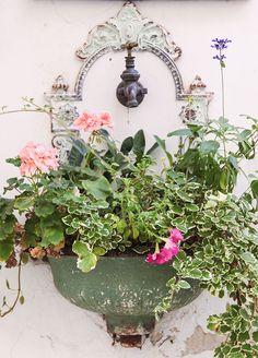 Wiener Dekoration (c) STADTBEKANNT - Das Wiener Online Magazin Honeymoon Pictures, Online Magazine, Heart Of Europe, Vienna, Austria, Garden, Nature, Flowers, Plants
