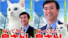 It's not that cats are important in Japanese politics. Cats are important. Full stop.
