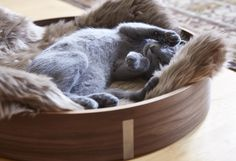 MiaCara Gatto cat basket Anello walnut/Taupe