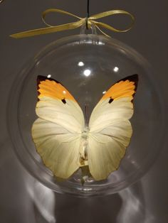 """Antios mennippe"" from Peru                   100mm $20.00 US clear ornament Butterfly Ornaments, Clear Ornaments, Peru, Christmas Bulbs, Holiday Decor, Crafts, Home Decor, Turkey, Manualidades"